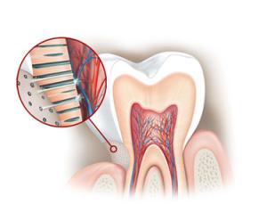 dentalmesquida.com